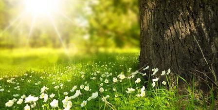 naturaleza-medio-ambiente-e1505407093531