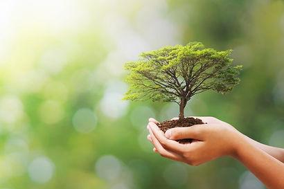 mano-que-sostiene-arbol-naturaleza-verde