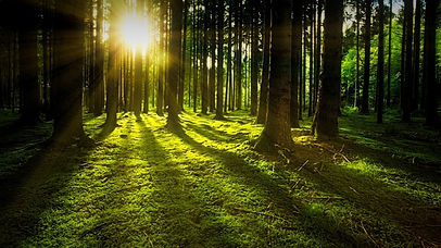Forest-900.jpg