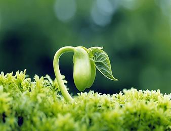semillas-en-la-naturaleza.png