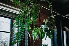 interio plantscape