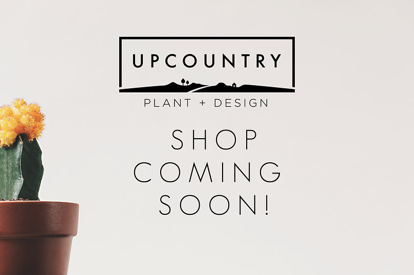 cactu in pot - upcountry shop coming soon