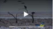 Screen Shot 2019-01-29 at 9.21.56 PM.png