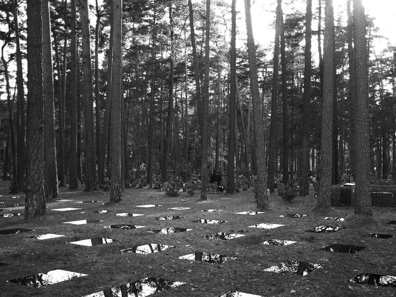Sjöblom Freij_Memorial_Forest.jpg
