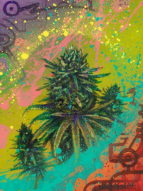 """Purple Haze"" - Small Canvas Print by Dave Barton"