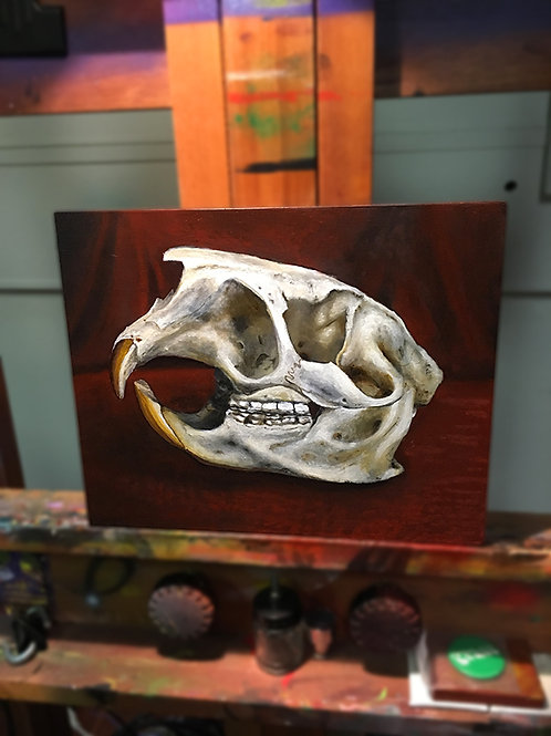 """Nap Time Beaver Skull"" -Original by Dave Barton"