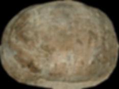 P0210306.JPG