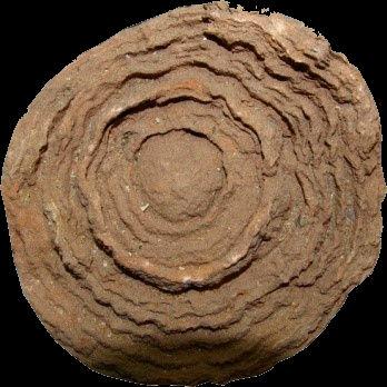 Stromatolithe.jpg