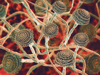 Mycotoxins: The Inconspicuous CulpritForThe Cause Of Anxiety