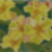 151E Summer Palette- Primrose.jpg