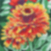 88D Large Yellow Flame Zinnia.jpg