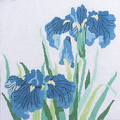 68 Blue Siberian Iris.jpg