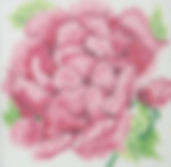 60BSmall Cabbage Rose.JPG