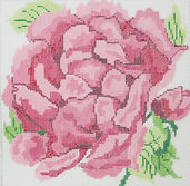 60BSmall Cabbage Rose.JPG
