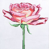 15E Regal Pink Rose.jpg