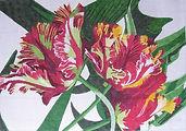 99A Parrot Tulip Rug.jpg