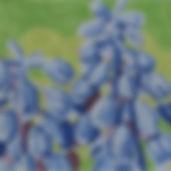 151G Summer Palette- Grape Hyacinths.jpg
