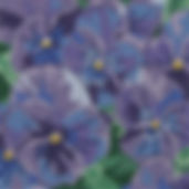 87B Sm True Blue Pansies.jpg