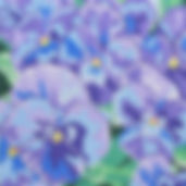88B Large True Blue Pansies.jpg