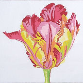 15C Regal Parrot Tulip.jpg