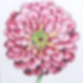 15D Regal Zinnia.jpg