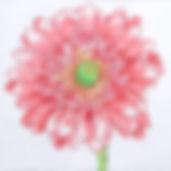 15B Regal Gerber Daisy.jpg