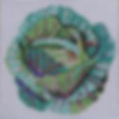 126A Sm Cabbage.jpg