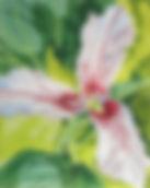 6 Painted Trillium.jpg