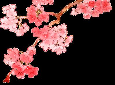 fleurs cerisier.png