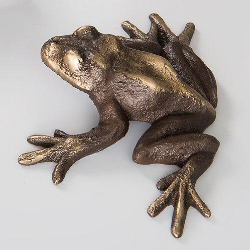 Frog by Scott Nelles