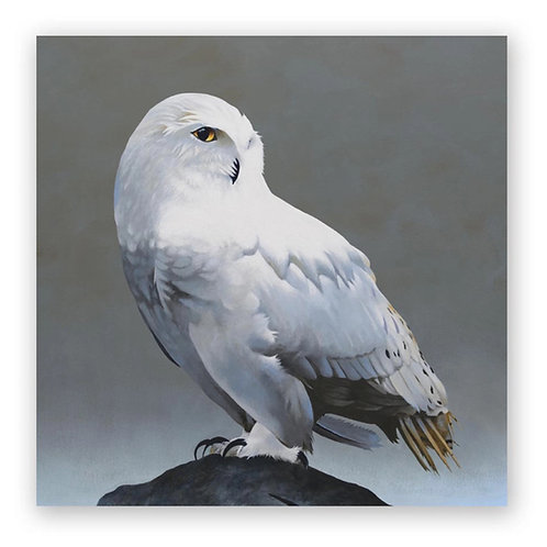 10 x 10 Snowy Owl on Rock Panel Wings on Wood by The Mincing Mockingbird
