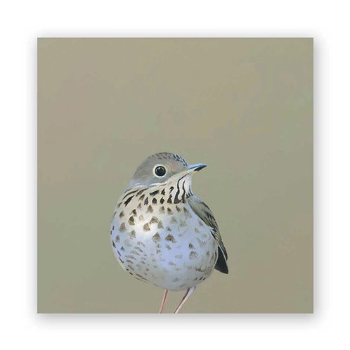 8 x 8 Thrush Panel Wings on Wood by The Mincing Mockingbird