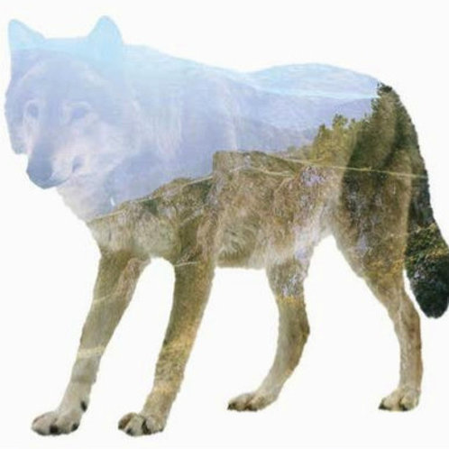 Forest Wolf Art Print, Animal Nature Photography