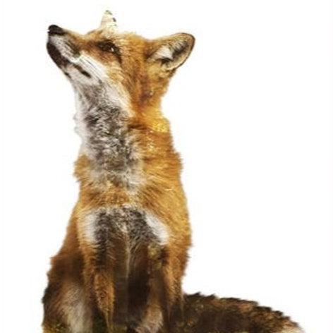 Woodland Red Fox Art Print, Animal Nature Photography