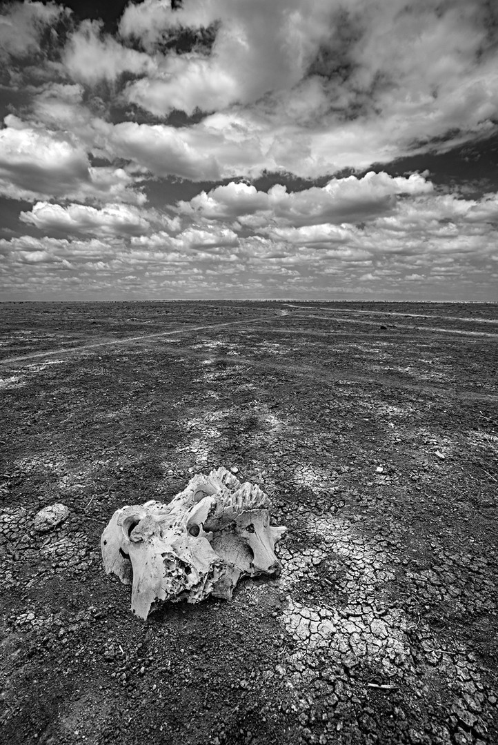 SKULL ON THE DRY LAKE