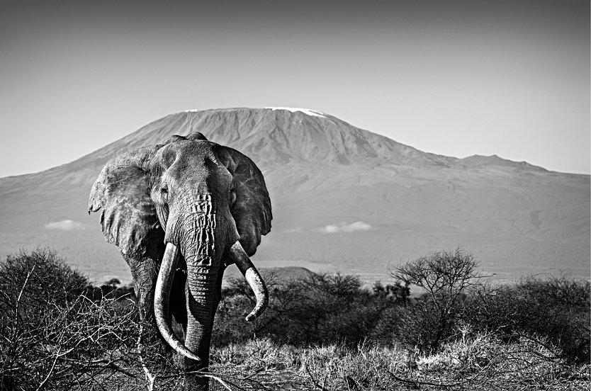 ELEPHANT WITH KILIMANJARO