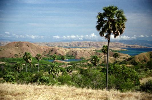 Rinca Island Tour. Hiking to Loh Buaya the home of the dragon. Komodo island tour with Laba Laba Boat.