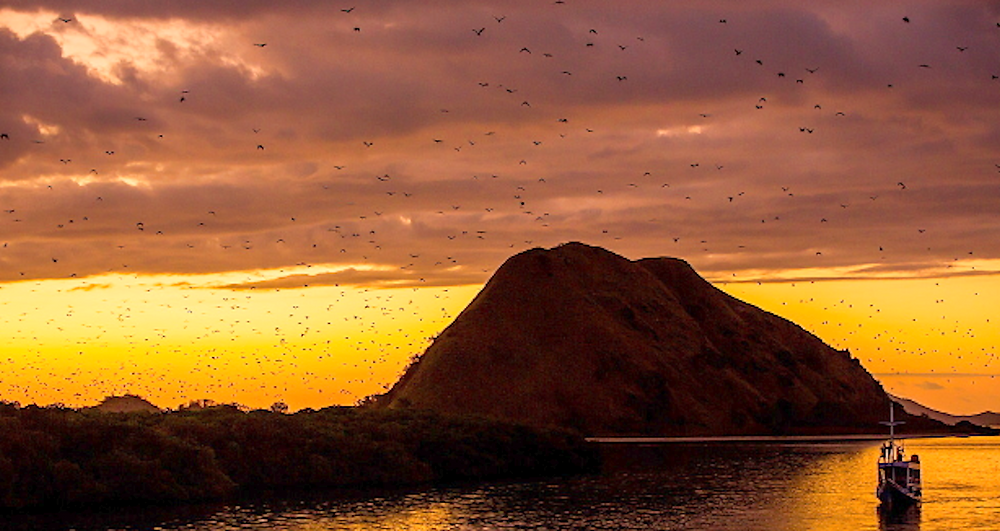 Thousands of Bats coming out during sunset. sunset at Komodo Island. Kalong rinca located in Komodo island. national geographic.