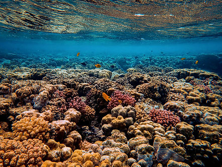 pink beach komodo corals and fish. diving komodo. komodo diving tour. boat diving to komodo from bali.