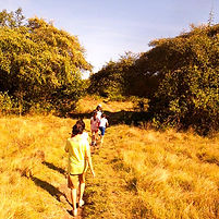 Rinca Island Komodo