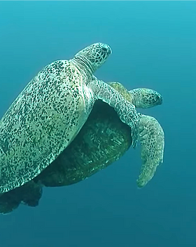 Explore Turtle Point in Siaba Island