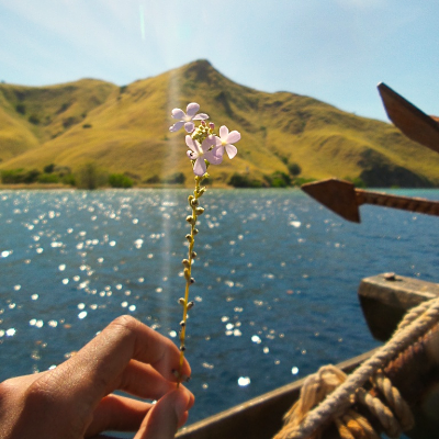 travel in solitude - private komodo tour