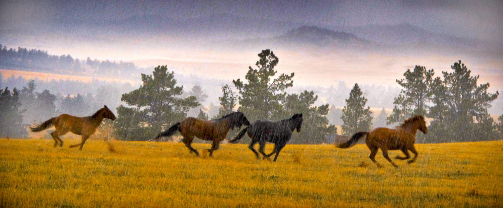 JRawlings-horses_2