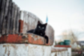 black cat sat on wall