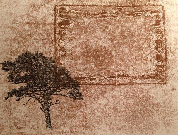 arbre S Vallée.jpg