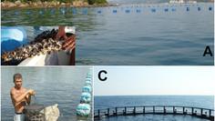 O que é Maricultura?