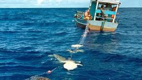 Tartarugas marinhas e a pesca nos oceanos