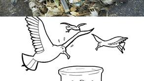 Pesticidas e Aves Marinhas