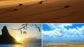 6 parques brasileiros que ajudam a proteger o bioma marinho