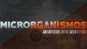 Microrganismos antárticos: entre o fogo e o gelo